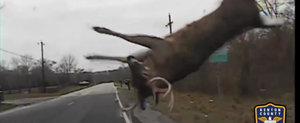 Bambi vs. masina de politie: in urma unui impact, toata lumea pleaca fericita