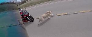 Cu ce se confrunta zilnic romanii: un caine produce un accident in randul unor motociclisti, undeva in America