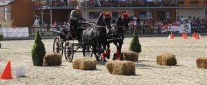 De la cal, la cal putere - eveniment spectaculos in acest week-end la Tancabesti