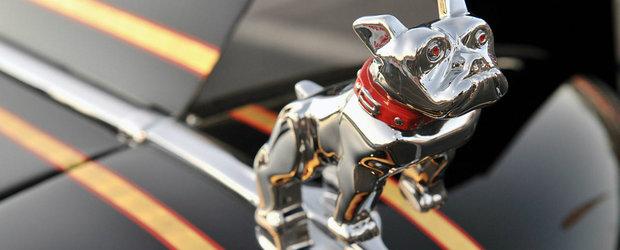 10 animale si legatura lor cu domeniul auto