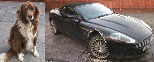 Aceasta fata nevinovata a mancat aripa unui Aston Martin de 100.000 Euro