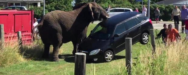 Aminteste-ti sa nu-ti lasi niciodata masina in apropierea unei turme de elefanti