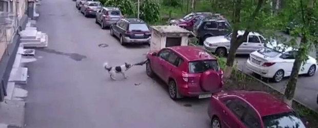 Cainii din Rusia lasa fara aripa o Toyota RAV4