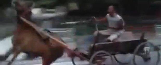 Calul cu ABS, curse ilegale de carute si o cazatura amuzanta
