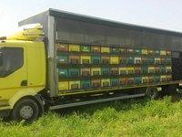 Camion apicol pavilionn