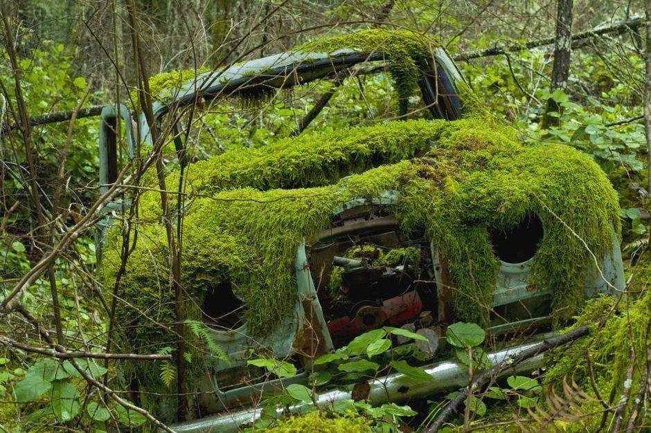 Cum sa readuci la viata o masina care a stat multi ani nepornita