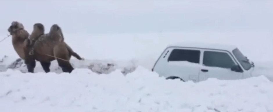 Curiozitatea de luni: de cate CAMILE este nevoie pentru a tracta o LADA din zapada?