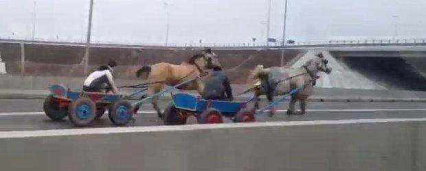 Curse ilegale de carute pe A2, in Constanta