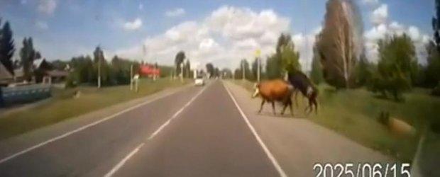 Dragostea la animale poate deveni dureroasa in Rusia