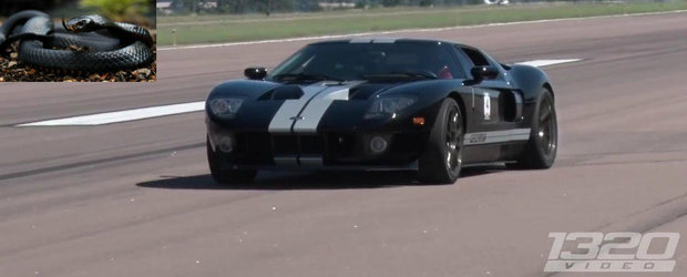 Exista un motiv serios pentru care acest Ford GT e supranumit 'Mamba neagra'