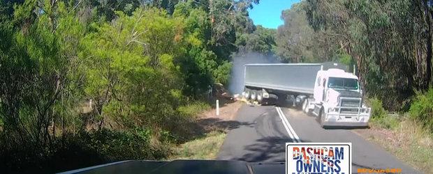 In Australia, pana si copacii incearca sa te omoare pe sosea