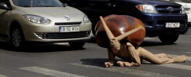 Intamplare inedita in Bucuresti. Coada de masini din cauza unui... melc