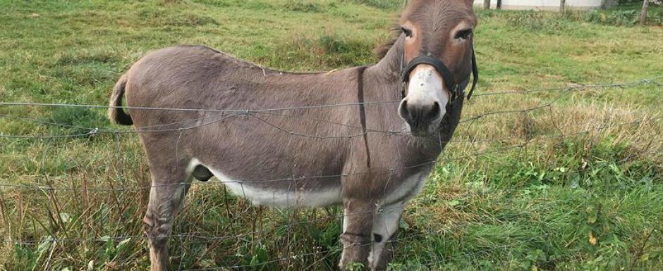 Justitia i-a obligat sa plateasca 5.800 de euro dupa ce magarul lor a muscat dintr-o masina de peste 300.000 de euro