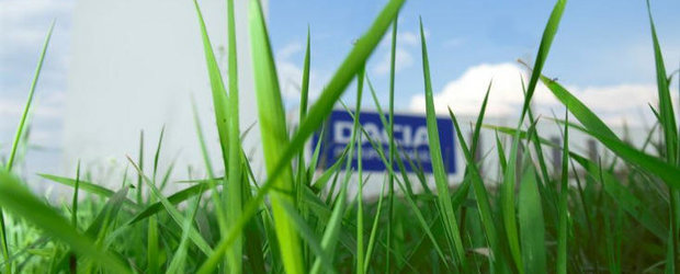 La Dacia, 50.000 de metri patrati de teren au fost acoperiti cu gazon nou