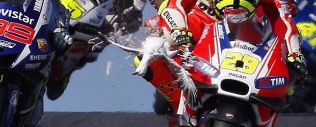 Motociclistul Andrea Iannone loveste un pescarus in timpul cursei si isi vede de drum linistit