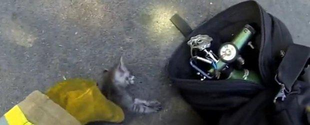 Pompierul care salveaza o pisica te va emotiona la maxim