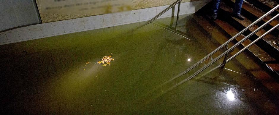Secretul de sub Bucuresti: ce traieste intr-o statie inundata de metrou