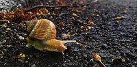 Click image for larger version  Name:snail1.jpg Views:28 Size:4.35 MB ID:2025479