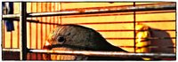 Click image for larger version  Name:parrot.jpg Views:31 Size:3.13 MB ID:2025495