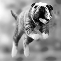 Click image for larger version  Name:JUMPING_CAT_by_illugraphy.jpg Views:101 Size:221.1 KB ID:1215045