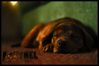 Click image for larger version  Name:puppy.jpg Views:101 Size:240.4 KB ID:1177558