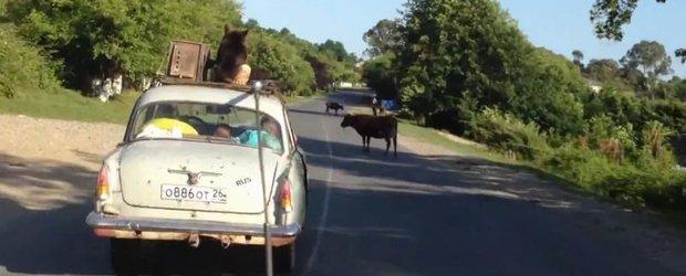 Unde poti sa transporti un caine, cand ai o masina mica si plina