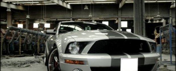 Wallpapers: Shelby GT500